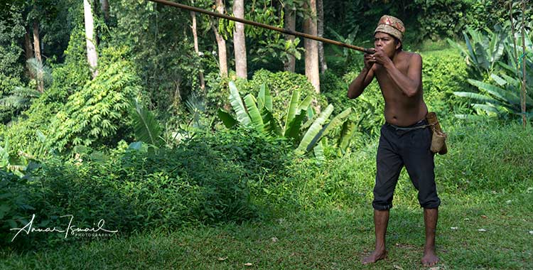 blowpipe demonstration by senoi people